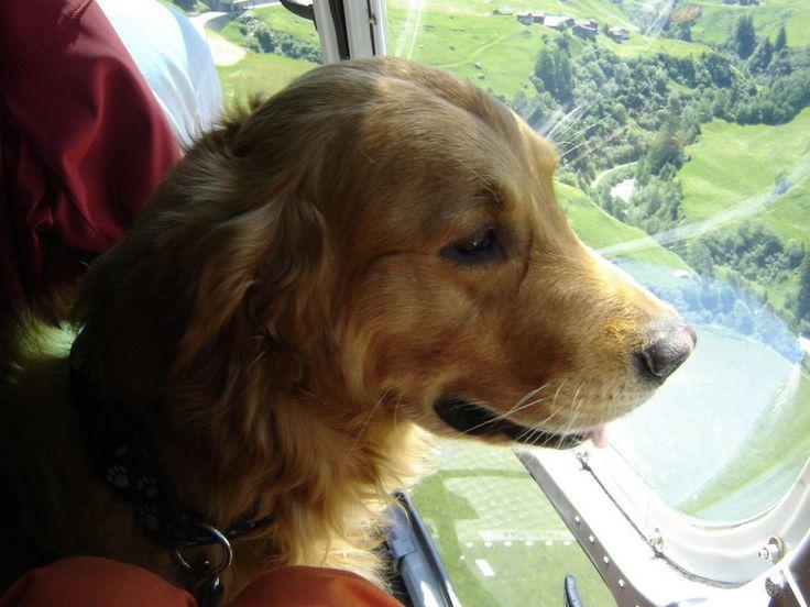 REDOG – Schweizerischer Verein für Such- und Rettungshunde – Übungseinsatz in der Türkei