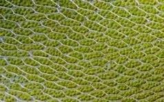 Bionic Leaf Makes Fuel from Sunlight, Water and Air   chemical research   Scoop.it