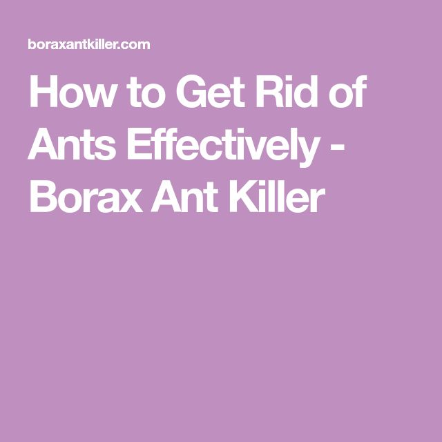 How to Get Rid of Ants Effectively - Borax Ant Killer