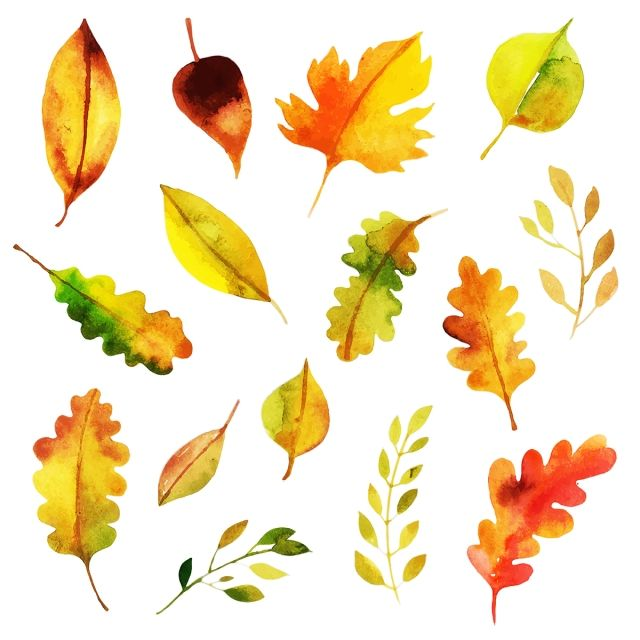 Beautiful Watercolor Autumn Leaves Collection Watercolor Paint