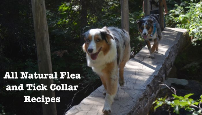 All-Natural Flea and Tick Collar Recipes