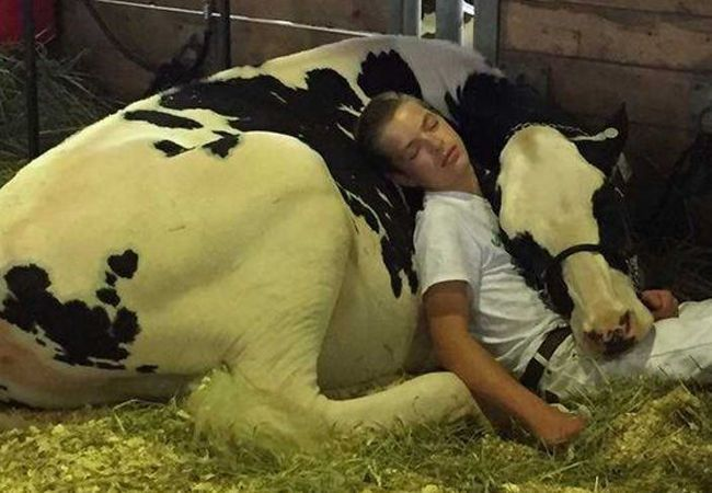 This is the sweetest thing. How can anyone say animals don't have feelings? Poor girl will head back to a dairy where she'll be used and abused. I'm glad she was able to to know love and kindness. C. Johnson~
