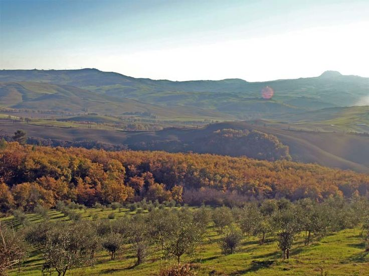 The property covers 7.9 hectares, including 5.5 hectares of olive grove with more than 700 plants (cultivars typical of the area: Leccino, Moraiolo, Frantoio and others).
