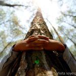 Las 14 especies de árboles que al abrazarlos sanan diversas partes del cuerpo…