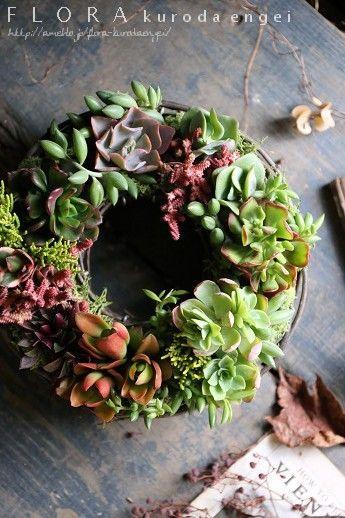 多肉植物|フローラのガーデニング・園芸作業日記-3ページ目
