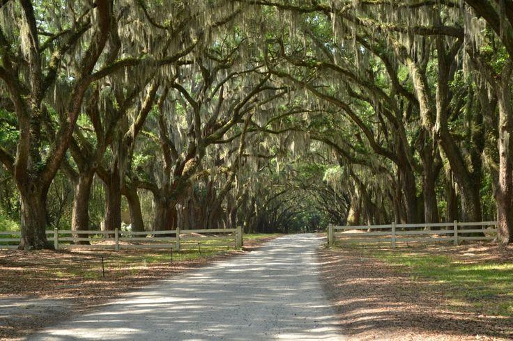 Плантация Вормсло, Cаванна, Джорджия (Wormsloe Historic Site, Savannah, GA)  http://uienifer-travel.blogspot.com/2014/06/c-wormsloe-historic-site-savannah-ga.html
