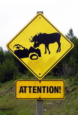 Moose Warning Sign in Gros Morne National Park