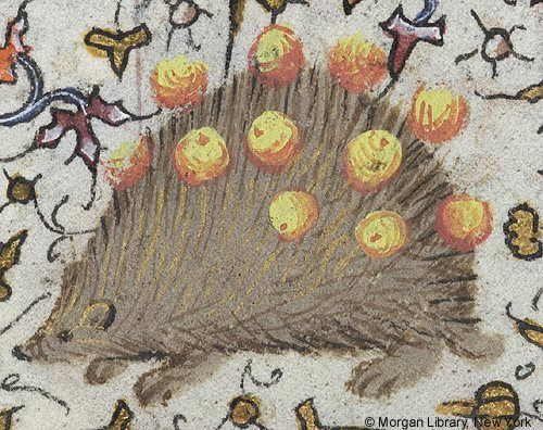 The miniature shows a hedgehog with grapes on its quills inhabiting the foliate margins of this folio. From the Book of Hours of Charlotte of Savoy created in Paris, France, in the 15th century. New York, The Pierpont Morgan Library, Ms. M. 1004, fol. 82v. / Pinned this to Gotland as hedgehogs are sort of the emblematic animal on that beautiful island. / A Journey Through Medieval Life octavia.net
