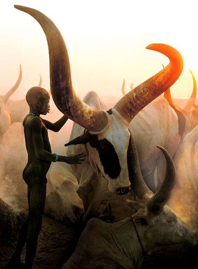 Dinka herdboy and his cows. Credit to the photographers Carol Beckwith and Angela Fisher.
