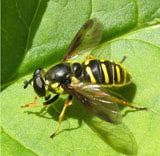 How to Attract Beneficial Insects to Control Garden Pests