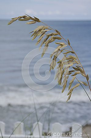The Atlantic Ocean makes the perfect backdrop for these sea oats.