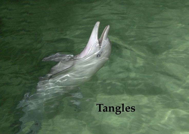Feed wild dolphins on the island of Tangalooma, just off Australia.