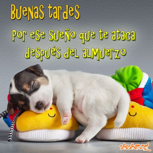 Perro durmiendo