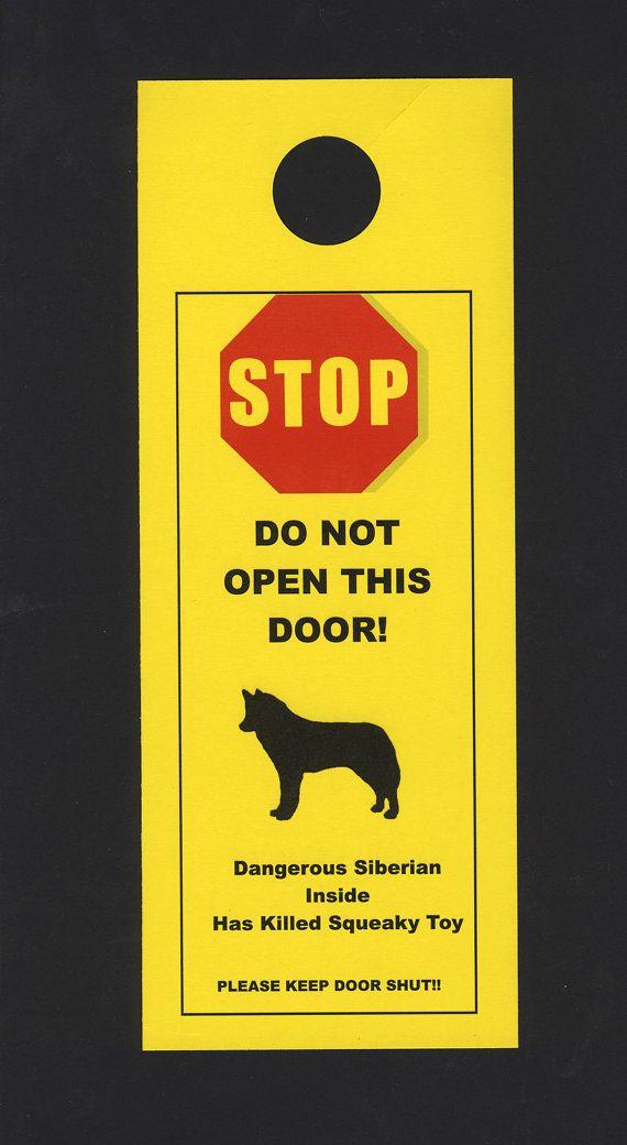 Dangerous Siberian Husky Inside - Has Killed Squeaky Toy