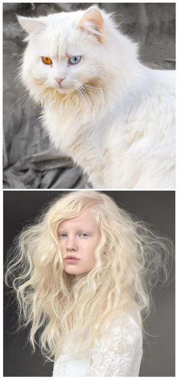 Happy Friday!!Cat found online paired with a portrait from a Jean Marc Joubert Hair shoot.