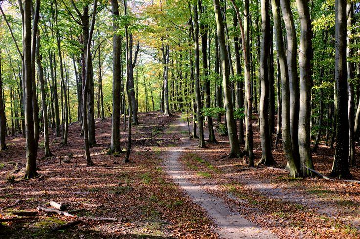 Sopocki las jesienią