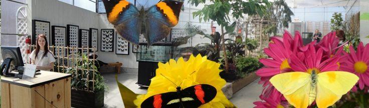 Ferme Guyon  Papillonnerie