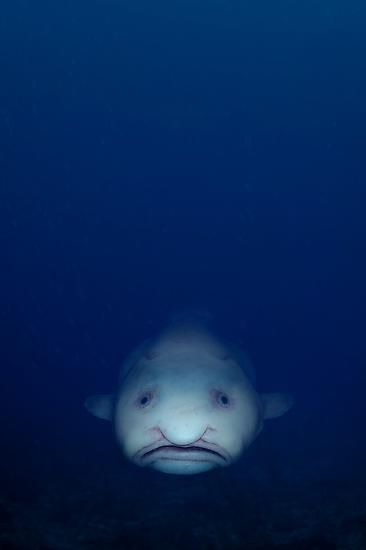 Creepy Fish. Damn. Creepy.