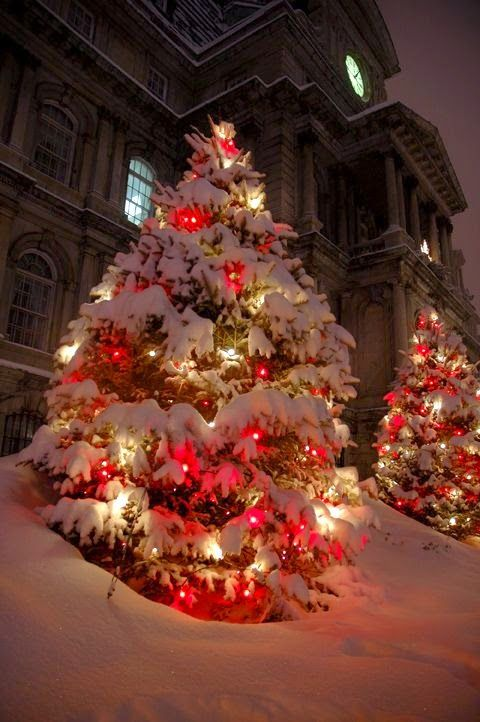 Red And White Christmas Lights.....
