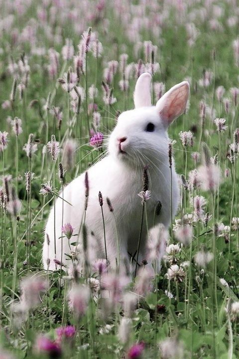 Bunny Rabbit in Spring Meadow - All Things Shabby and Beautiful