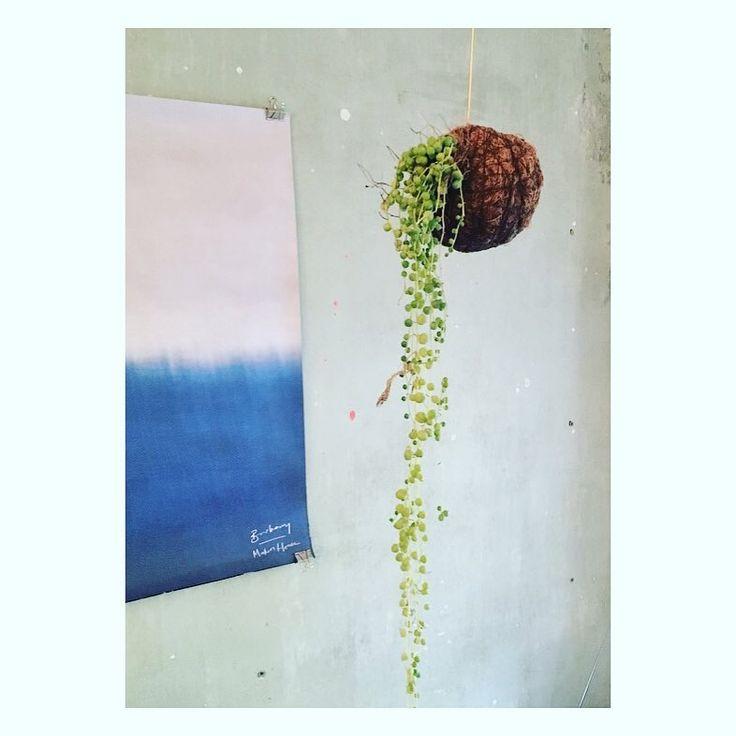 "106 Synes godt om, 4 kommentarer – Planteplaneter (@planteplaneter) på Instagram: ""Hanging #planteplaneter #greenliving #urbangarden #kajaskyttestudio #danishdesign #succulents…"""