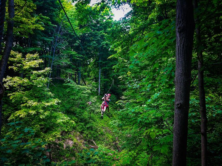 Zip lining through @ontariotravel's Carolinian Forest.