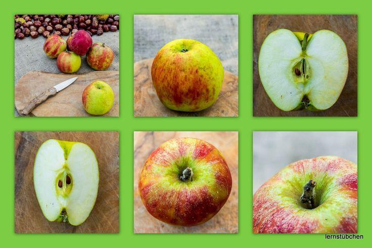 Lernstübchen: auch Äpfel lassen sich fotografieren
