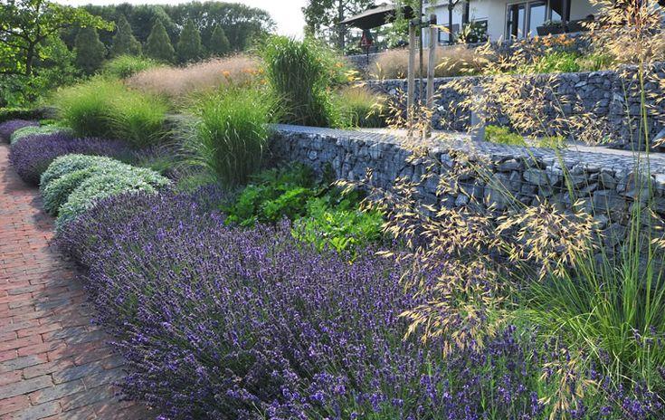 Kleurige en geurige lavendel   Lagendijk tuin- en landschapsarchitecten