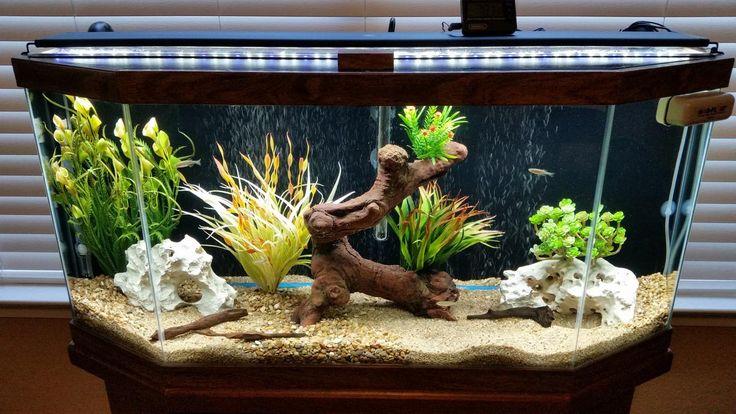 30 Gallon Freshwater Aquarium Setup