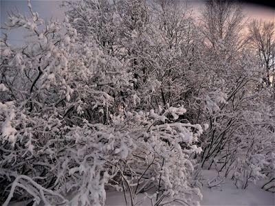 Portfolio Multimedeia 2: Winter wonderland 3