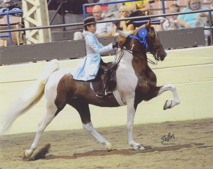 ASHA - American Saddlebred Horse Association; CH Sprinkles  I actually have the Breyer of her! aahh!