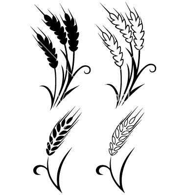 Gallery For Wheat Stalk Vector   Ink   Pinterest   Search ...
