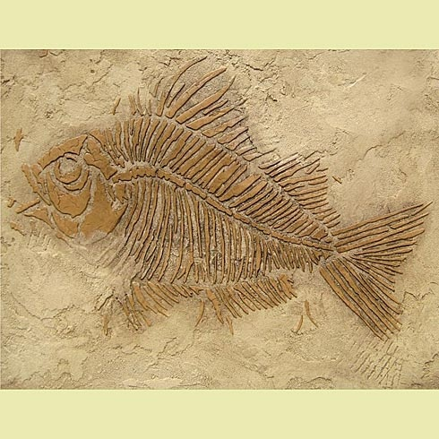 Cutting Edge Stencils - Prehistoric Large Fish Fossil Stencil AND they have other fossil stencils.  Oh the possibilities... I'm thinking outside  around the pool, or in the bathroom.  What kid wouldn't want this on his wall in the bedroom, too!