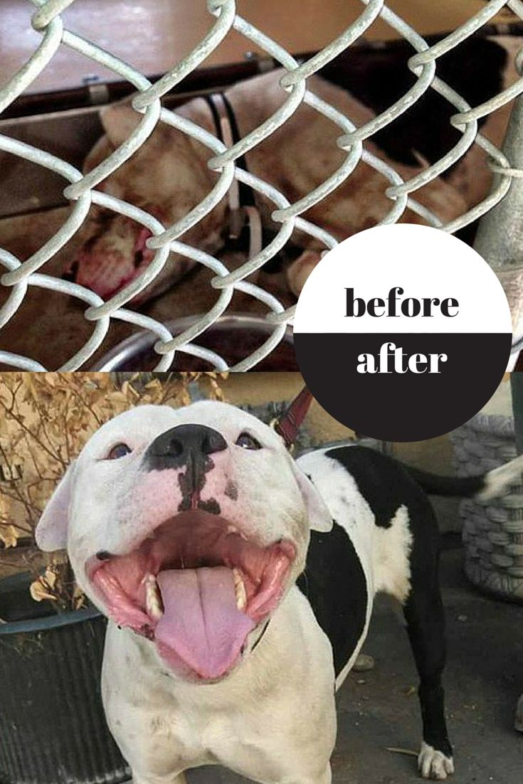 44 best rescues before u0026 after images on pinterest animal rescue