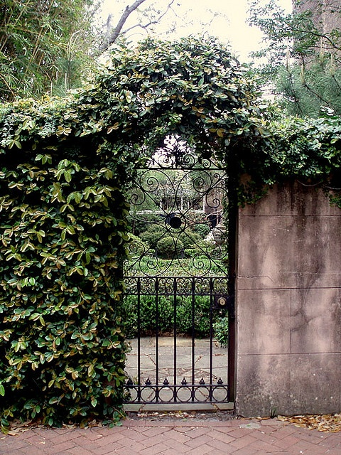 Georgia Garden: 115 Best Images About Courtyard Gardens Of Charleston And