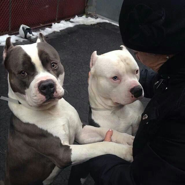 Two pits