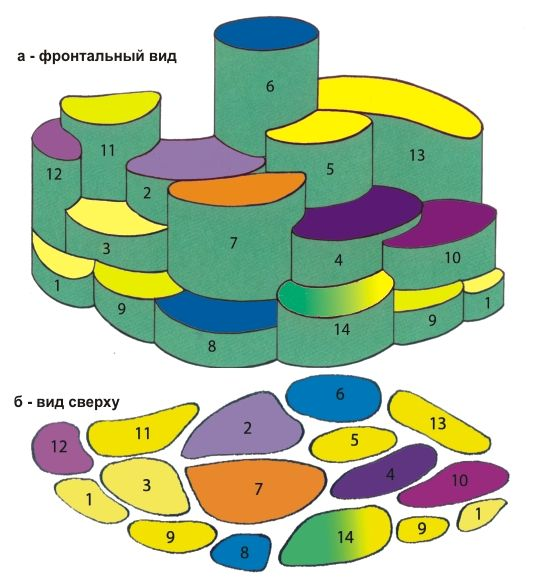 План-схема миксбордера. Графическое изображение цветника