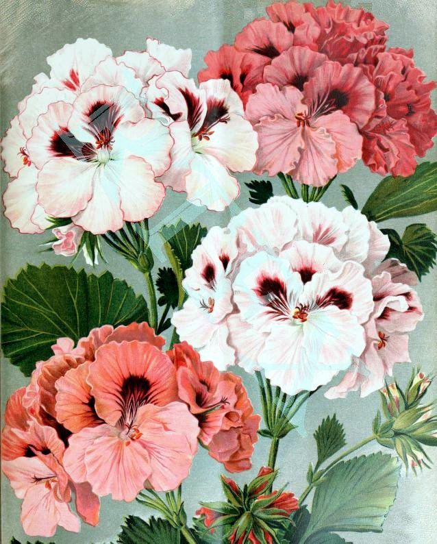 Geraniums Flower Blank Notecard Mother's Day Easter Handmade by RTFX on Etsy