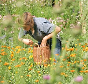 Dr. Hauschka medicinal herb garden: more than 150 different plant species flourish here, ready to be used in Dr. Hauschka Skin Care and WALA Medicines products.