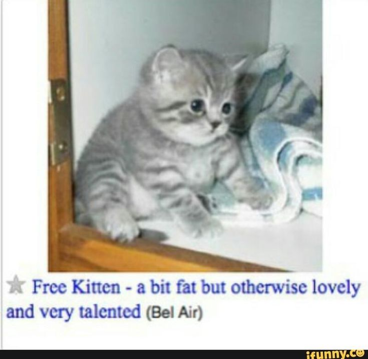 Top 10 Craigslist Cat Memes Cat memes, Kittens, Cute animals