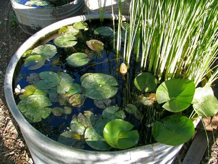 Water Garden, courtesy of University of California Agriculture and Natural Resources: Gardens Ideas, Gardens Ponds, Water Gardens, Wine Barrels, Backyard Ponds, Water Features, Outdoor Gardens, Gardens Design, Water Lilies