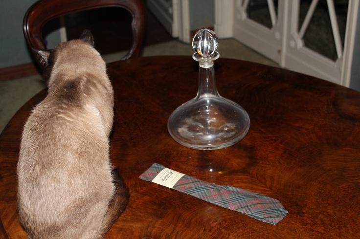 A 60s Irish tie with a cat