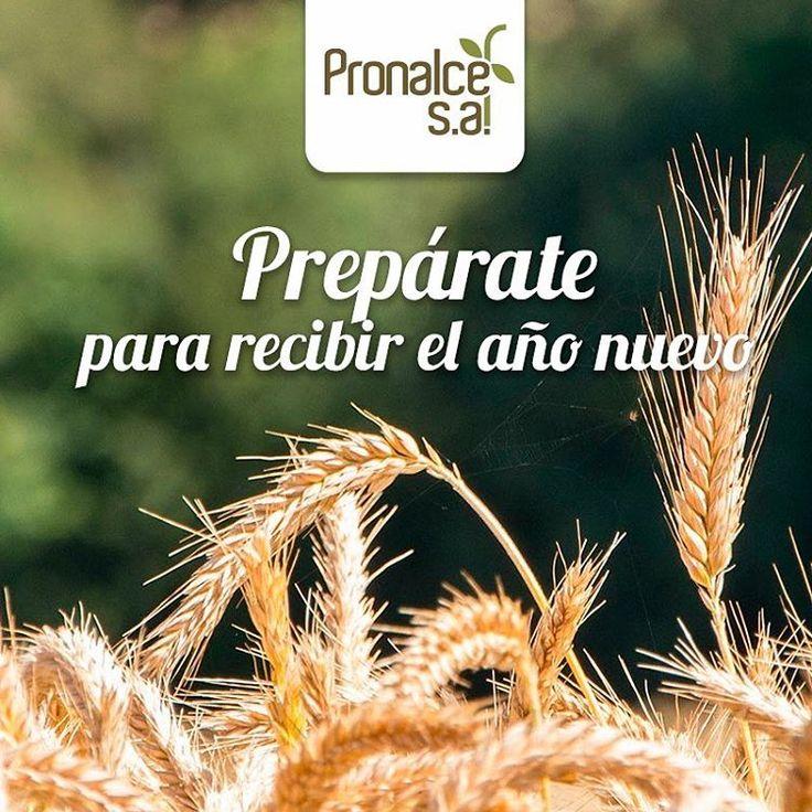 ¿ #SabíasQué hay una tradición de adornar la casa con espigas de trigo como símbolo de abundancia? Se reparten entre los participantes de la celebración de fin de año para que las sostengan a la media noche. #Pronalce  #Pronalce #Avena #Wheat #Trigo #Cereal #Granola #Fit #Oats #ComidaSaludable #Yummy #Delicious #Tasty #Instagood #Delicioso #Sano #HealthyFood #Breakfast #Protein #Nutrición #Cereales