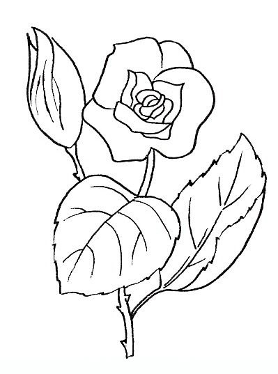 rose free coloring pages for teenagers and adults - Rose Coloring Pages Teenagers