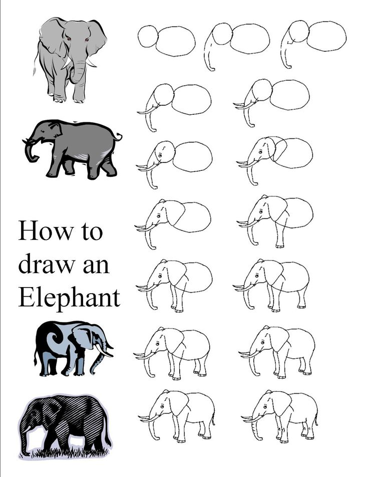 Elephant Drawing Tutorial | Drawing And Paintin...