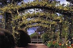 The Blue Mountains Botanic Garden, Mount Tomah