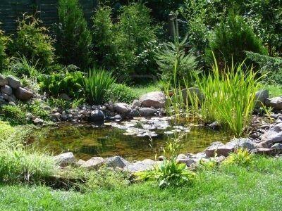 Kleine tuin vijver stockfoto 523429 tuin en wonen for Decorative pond fish crossword clue
