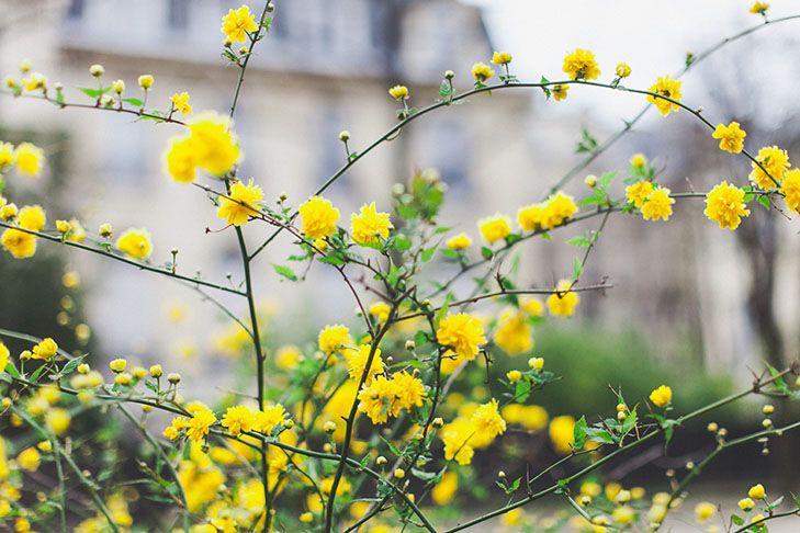 Primavera en París.