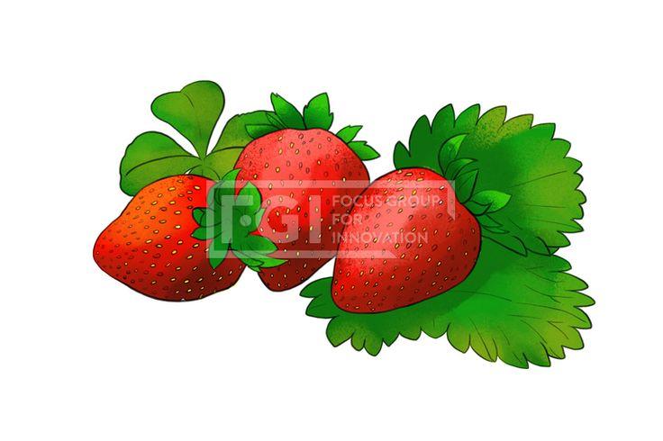 SPAI219, 프리진, 일러스트, 음식, 음식물, 제철, 제철음식, 시즌, 계절, 음식재료, 재료, 신선한, 프레쉬, 후레쉬, 손질, 식량, 식료품, 건강, 웰빙, 과일, 과실, 유기농, 열매, 풀, 잎, 식물, 녹색, 초록, 연두색, 빨간, 빨강, 딸기, 한식, 식재료, 건강관리, 농업, 농작물, 농장, 시장, 상품, 자연, 생활,#유토이미지