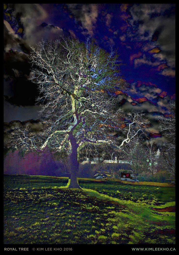 'Royal Tree' by Kim Lee Kho. Photo-digital print, 2016. #tree #dark #intense #colour #night www.kimleekho.ca https://www.flickr.com/photos/kimleekho/